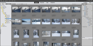 Photoshop Elements Organizer